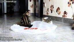 Котята-бесенята смотреть видео прикол - 1:30