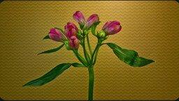 Смотреть Весна: цветы распускаются!