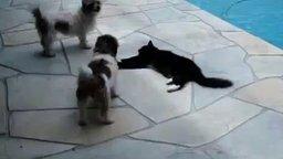 Смотреть Две собаки против кошки