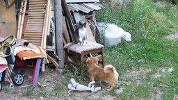 Котёнок и щенок смотреть видео прикол - 0:54