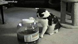 19 котов Чака Норриса смотреть видео прикол - 1:29