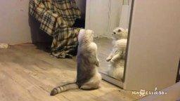 Смотреть Житуха домашнего котяры