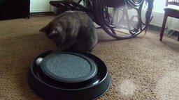 Смотреть Как выглядит кошачье одиночество