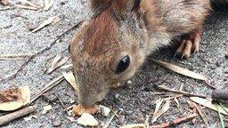 Смотреть Лесная белочка и орешки