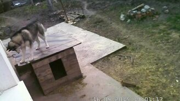 Смотреть Собака устроила потоп