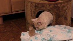 Смотреть Котёнок выпал из гнезда