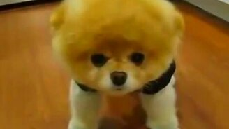Смотреть Собака как игрушка