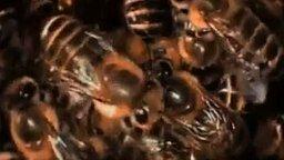 Смотреть Рой пчёл