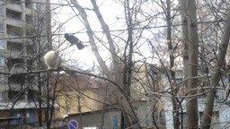 Смотреть Ворона дразнит кошку