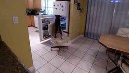 Пёс сам себя кормит смотреть видео прикол - 0:38