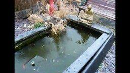 Смотреть Кошка на льду охотится за рыбками