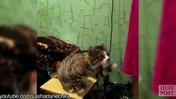 Коты дрессируют хозяев смотреть видео прикол - 1:38