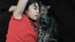 Смотреть Девочка и кот сладко спят