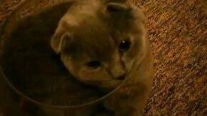 Кот помещается в аквариум смотреть видео прикол - 2:26