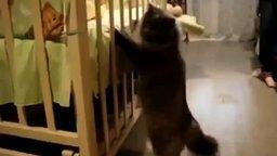 Смотреть Кот знакомится с ребёнком
