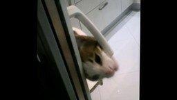 Смотреть Кот запускает хозяина с балкона