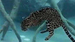 Смотреть Ягуар-ныряльщик