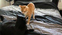 Кот заправляет кровать смотреть видео прикол - 1:47