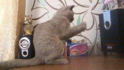 Смотреть Кот и сабвуфер