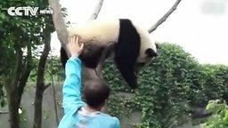 Сними меня с дерева! смотреть видео прикол - 1:08