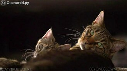 Смотреть Кошки и коты в замедлении