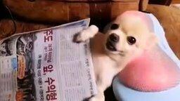 Смотреть Собачка на массажной подушке