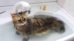 Купание неправильного кота смотреть видео прикол - 3:17