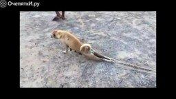 Неудача собаки-симулянтки смотреть видео прикол - 0:20
