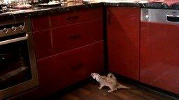 Смотреть Сурикат против кухонного гарнитура