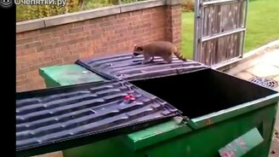 Неудачные прыжки животных