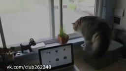 Смотреть Самый боевой кот