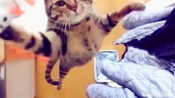 Коты, коты, коты! смотреть видео прикол - 5:49