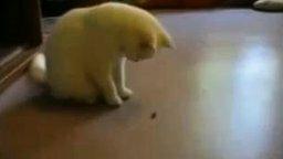 Смотреть Кот против мухи