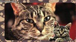 Смотреть Познавательно о кошках