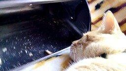 Современный кот против мыши смотреть видео прикол - 1:07