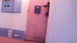 Смотреть Кошка звонит в дверной звонок