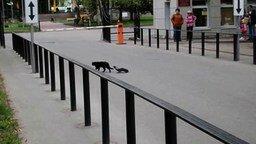 Невозмутимый кот и ворона смотреть видео прикол - 0:25