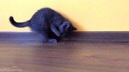 Смотреть Котёнок-бельчонок