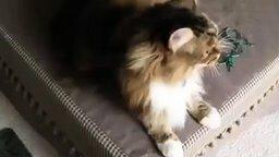 Смотреть Кот подпевает хозяйке