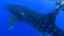 Смотреть Неожиданная встреча с акулой