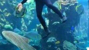 Смотреть Дайвер ласкает акулу
