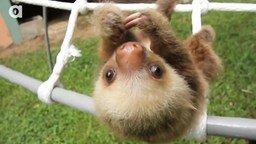 Смотреть Ленивцы разговаривают