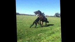 Смотреть Девушка послала коня, а он - её