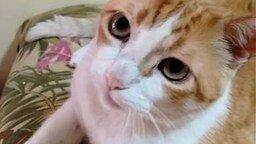 Смотреть Кошка подпевает хозяину