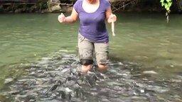 Смотреть Рыбы выпрашивают корм