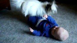 Смотреть Собачонка веселит малыша