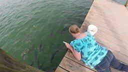 Опасно рыбок кормить... смотреть видео прикол - 0:15