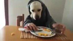 Смотреть Обычный собачий завтрак