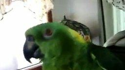 Смотреть Попугай распевается
