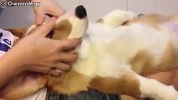 Самые ленивые собаки смотреть видео прикол - 3:50